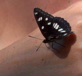 Papillon Domaine naturiste Arlane - Valensole - Verdon